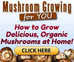 Mushroom How To Grow