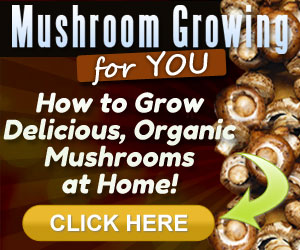 Mushrooms Farming