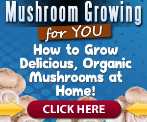 How Do I Grow Mushrooms At Home