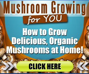 How Do I Grow Mushrooms